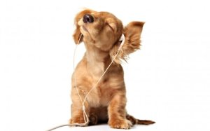 2965_Sweet-puppy-listening-to-music-with-headphones